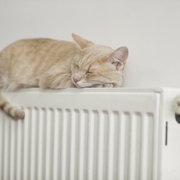 cat on radiator