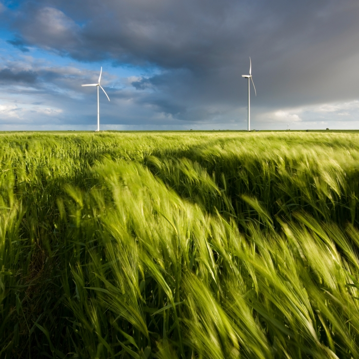 Wind turbines capture wind energy in grassy field