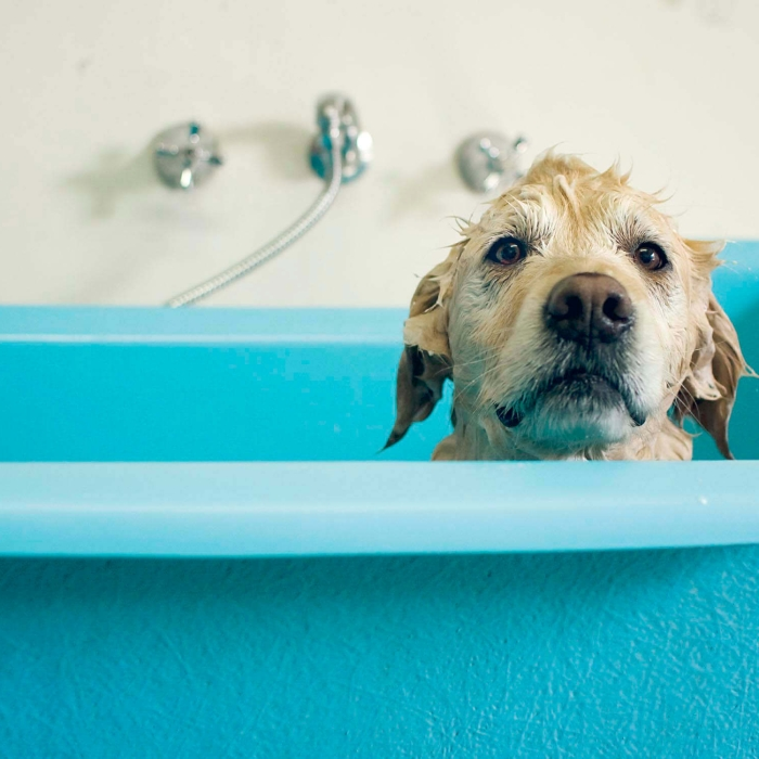 dog in bathtub
