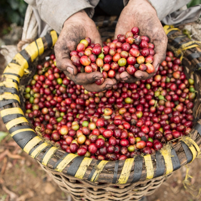 fair trade foods