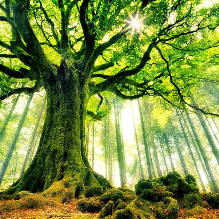 vibrant tree against the sunshine